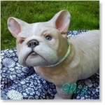 309110 - Dollkit 15 -  Bellami -  Franse Bulldog - Available