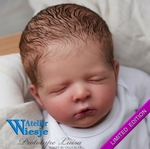 300336 - Dollkit 20 -  Jude - Open Edition - € 89,90 - Pre Order